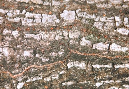 Bark tree texture background photo
