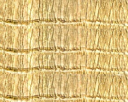 Palm bark tree texture background photo