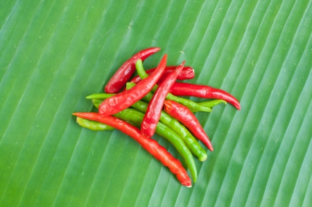 ingradient: Red and green chilli on leaf show food ingradient concept