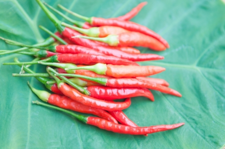 ingradient: Red chilli on leaf show food ingradient concept Stock Photo