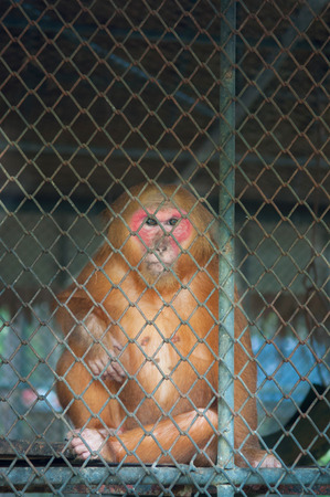 Monkey sitting alone in cage photo