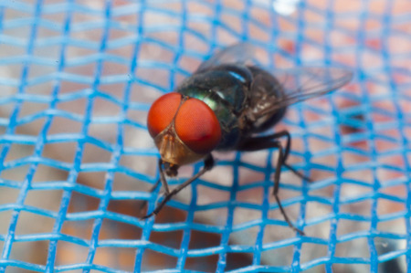caliphate: Fly on blue net