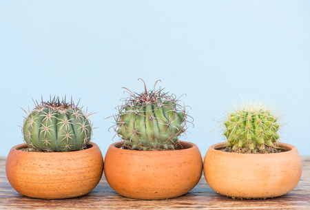 Cactus in flower pot on wood table Lizenzfreie Bilder