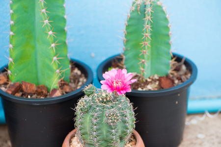 Cactus and flower in pot Stock Photo