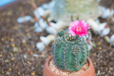 Closed up cactus and flower in pot