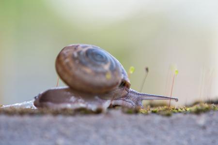 Snail crawls on moss Stock Photo