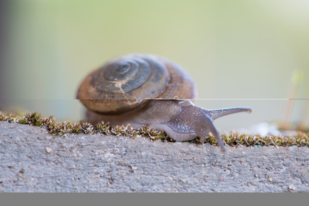 Snail on old wall Stock Photo