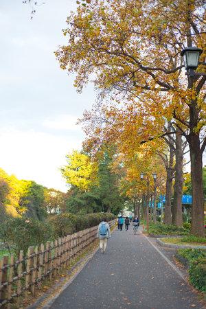 NAGOYA, JAPAN - NOVEMBER 14,2018:Tourist walk around of  Nagoya castle park in Nagoya,Japan 新聞圖片