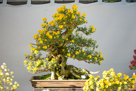 Bonsai tree with yellow flower