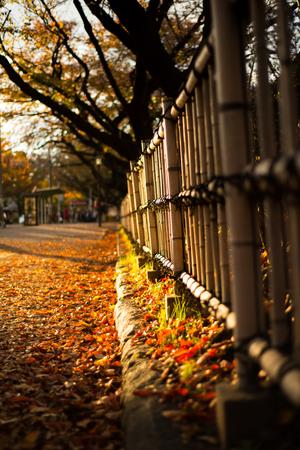 Autumn season and sunlight at Nagoya castle garden at Nagoya,Japan