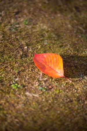 Red leaf on nature floor