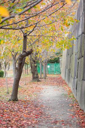 Osaka Castle park with in autumn season at Osaka, Japan 版權商用圖片
