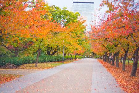 Osaka, Japan - November 13, 2018: Osaka Castle park in autumn season at Osaka, Japan