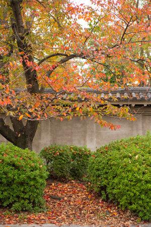 Osaka Castle park with in autumn season at Osaka, Japan 報道画像