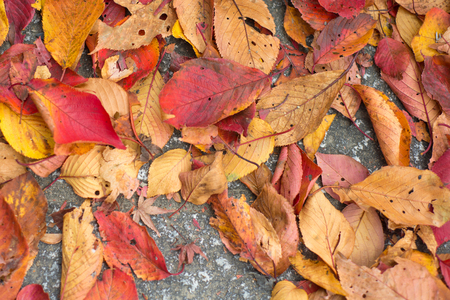Closed up autumn leaves background 写真素材