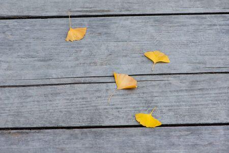 Yellow ginkgo leaves on wood floor