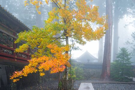 Yellow leaves of tree and fog in autumn season at Toshogu Shrine in Nikko,Japan Standard-Bild - 126246141