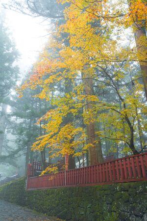 Autumn season contain fog at Nikko,Japan Stock Photo