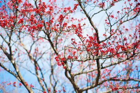 Red fruit in autumm season