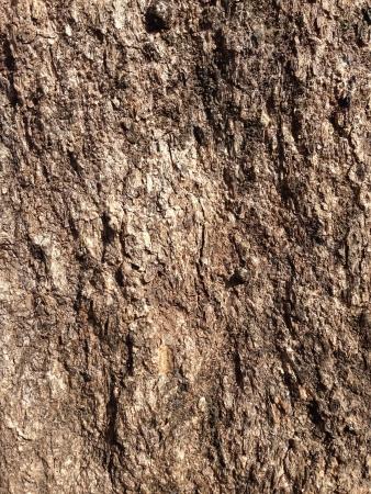 bark background: Bark background