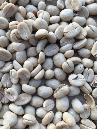 Raw  dry coffee beans,coffee process Reklamní fotografie