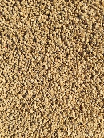 Dry coffee beans , coffee process Reklamní fotografie