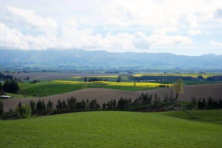 canola field, South Island of New Zealand Reklamní fotografie