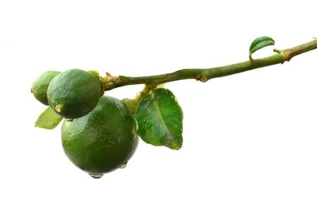 Green lemon on white background Stock Photo - 12538163