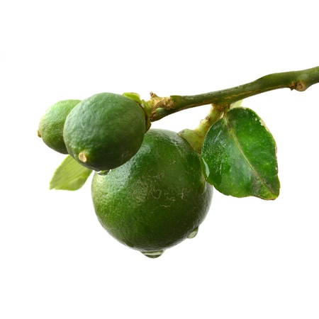 Green lemon on white background Stock Photo - 12538164
