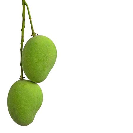 mango isolated: green mango on white background