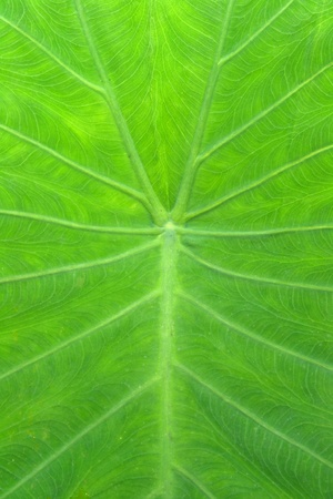 leaf of a plant close up Stock Photo