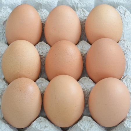 close up group of eggs in cardboard container