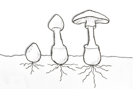 Pencil drawing of mushroom growth photo