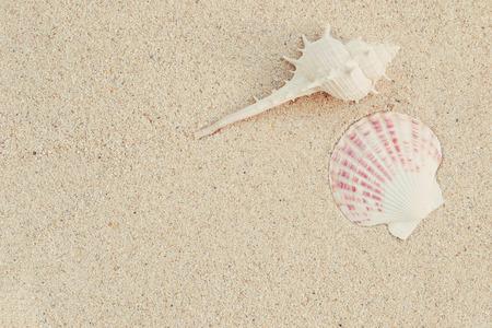 sea shells on sand, summer background, vintage color Stock Photo