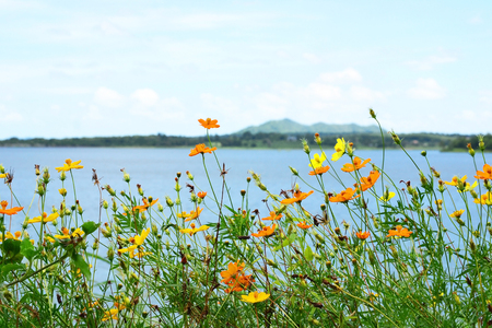 flower with reservoir and mountain background