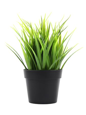 Artificial green grass in a pot isolated on white background