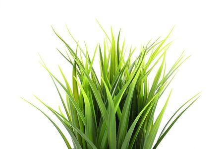 Artificial green grass isolated on white background Foto de archivo