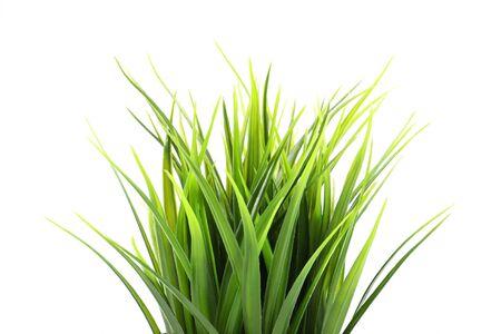 Künstliches grünes Gras isoliert auf weißem Hintergrund Standard-Bild