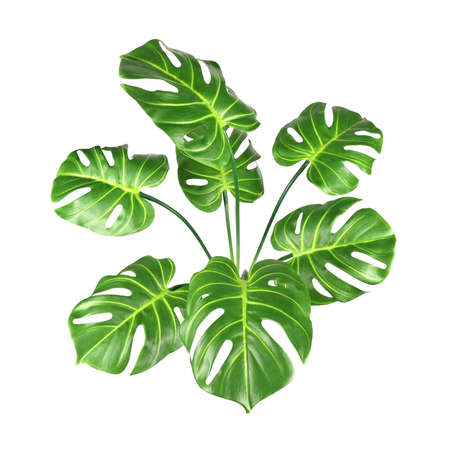 Decorative artificial monstera tree isolated on white background