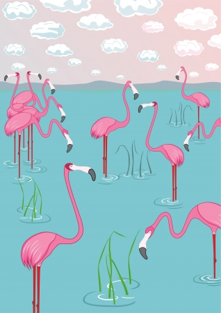 Pink flamingos on the bay. Vector illustration Vector