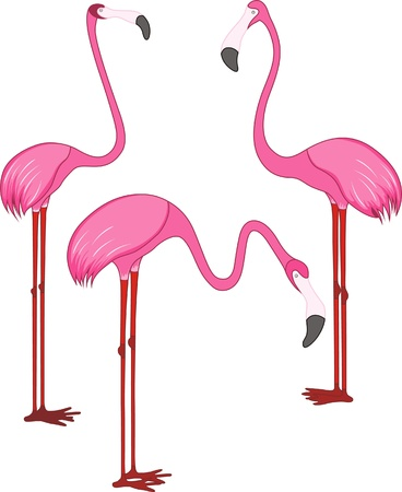 Three different beautiful pink flamingos. Vector