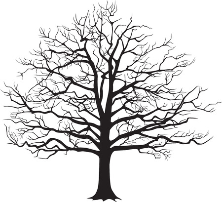 huge tree: Black silhouette bare tree . Vector illustration