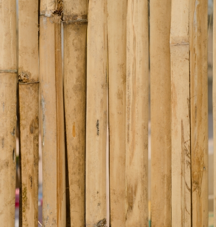 the old bamboo wall background photo