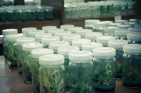 plant tissue culture in the laboratory photo