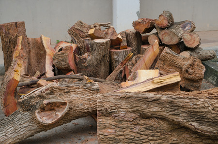 pile of log, pile of wood photo