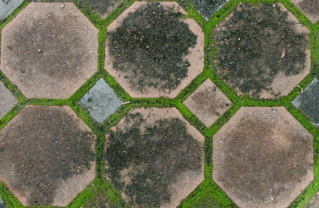 the interlocking concrete pavement with moss growing along photo
