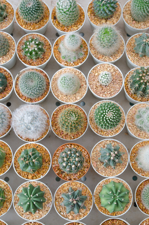 the Small different types of cactus plants. photo