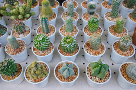 types of cactus: the Small different types of cactus plants.