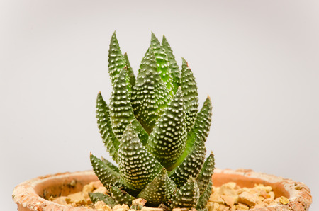 the Small different types of cactus plants in pot. photo