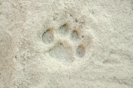 one cat paw prints in the sand.